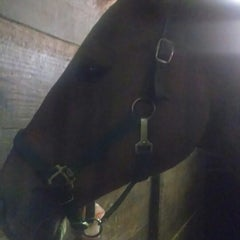 Photo taken at Equidream School of Horsemanship by Jon H. on 10/19/2013