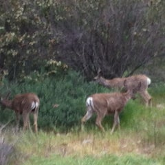 Photo taken at Claremont Five Mile Loop Wilderness Trail by Idaly L. on 4/1/2013