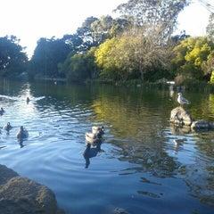 Photo taken at Golden Gate Park by Alyssa L. on 1/14/2013