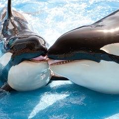 Photo taken at SeaWorld Orlando by Orlando e. on 2/14/2013
