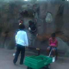 Photo taken at African Forest @ Houston Zoo by Ann D. on 1/26/2013