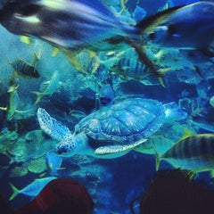 Photo taken at Aquaria KLCC by Dominic O. on 10/6/2012
