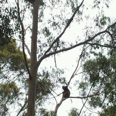 Photo taken at Koala Spotting In The Adelaide Hills by Cybaright on 12/10/2011