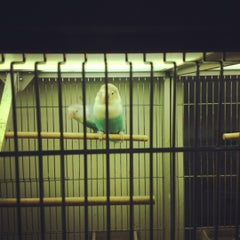 Photo taken at Botanic Accursio by yidian on 6/7/2012