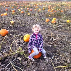 Photo taken at Curtis Orchard & Pumpkin Patch by Jill T. on 10/23/2011