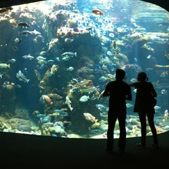 Photo taken at California Academy of Sciences by Kelvin L. on 6/23/2012