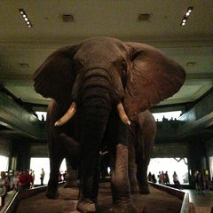 Photo taken at American Museum of Natural History by Viraj M. on 6/26/2013