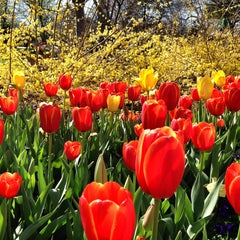 Photo taken at Dallas Arboretum and Botanical Garden by Faith H. on 3/15/2013