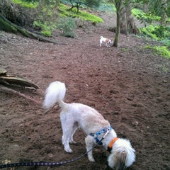 Photo taken at Buena Vista Park Dog Run by Jason F. on 1/9/2013