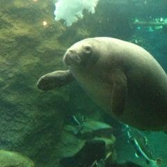Photo taken at Dallas World Aquarium by L C K. on 2/17/2013
