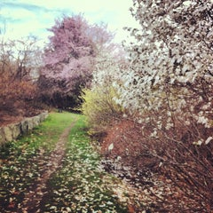Photo taken at Arnold Arboretum by Mai N. on 4/20/2013