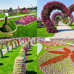 Photo taken at Dubai Miracle Garden by Saleh A. on 4/3/2013