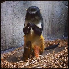 Photo taken at Primate, Cat & Aquatics Building by Jenn Z. on 6/26/2013