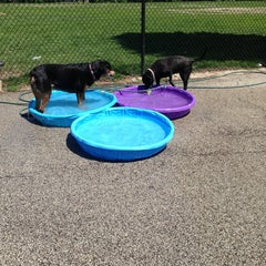 Photo taken at Churchill Field Dog Park by Natalie G. on 6/8/2013