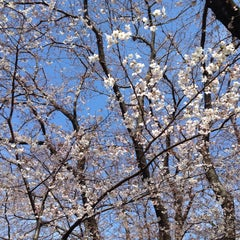 Photo taken at 富岡総合公園 by Umi Y. on 3/28/2015