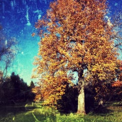 Photo taken at The Morton Arboretum by Keith N. on 11/10/2012