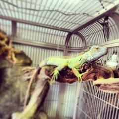 Photo taken at Pinellas County Reptiles And Pets! by F. Daniel K. on 2/9/2013