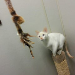 Photo taken at Animal Welfare League Of Arlington by Minju K. on 1/24/2013