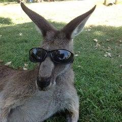 Photo taken at Lone Pine Koala Sanctuary by ☆ on 1/19/2013