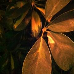 Photo taken at Kapote Kafé & Kopas by Jesus P. on 11/23/2012