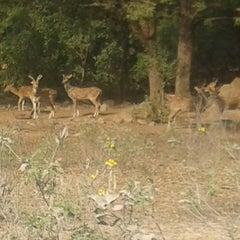 Photo taken at Shamirpet Deer Park by Harini on 1/14/2014