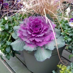 Photo taken at Pike Nurseries by Melodie M. on 1/9/2014