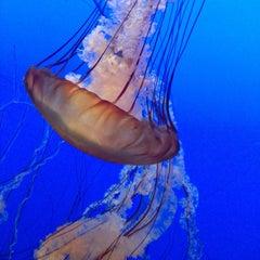 Photo taken at Monterey Bay Aquarium by Ay K. on 7/3/2013