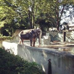 Photo taken at 井の頭自然文化園 by Nobuya O. on 8/19/2012