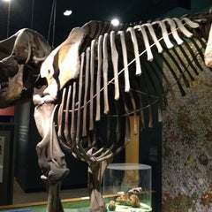 Photo taken at Dinosaurs/Hall of Paleobiology Exhibit by Alex S. on 4/27/2014