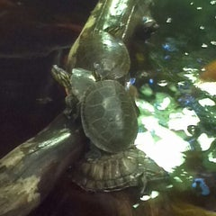 Photo taken at Reptile Island by Denise M. on 10/11/2012