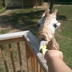 Photo taken at Elmwood Park Zoo by Philly G. on 8/10/2014
