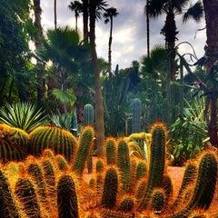 Photo taken at Jardin de Majorelle | حديقة ماجوريل by Mitch A. on 9/28/2014
