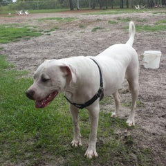 Photo taken at Estero Community Park Dog Run by Sonja H. on 6/7/2013