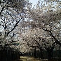 Photo taken at 哲学堂公園 by kotoshimo on 4/9/2012