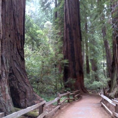Photo taken at Muir Woods National Monument by Tour C. on 7/19/2013