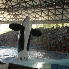Photo taken at SeaWorld San Antonio by Elvis on 6/8/2013