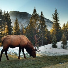 Photo taken at Banff National Park by Jerry A. on 11/8/2011