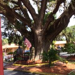 Photo taken at The Old Senator Tree by Rachel C. on 7/1/2014