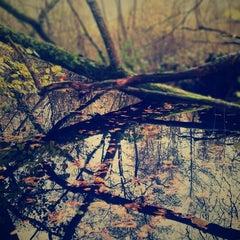 Photo taken at Burton & Chingford Ponds Sussex Wildlife Trust Nature Reserve by Derek F. on 11/10/2012