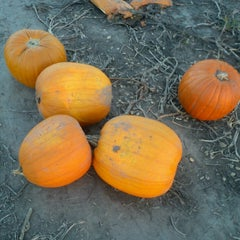 Photo taken at Curtis Orchard & Pumpkin Patch by Julie L. on 10/10/2013