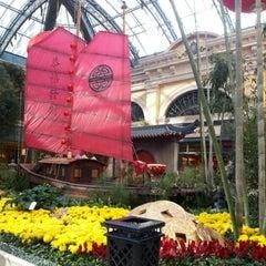 Photo taken at Bellagio Conservatory & Botanical Gardens by LaNiE C. on 2/14/2013