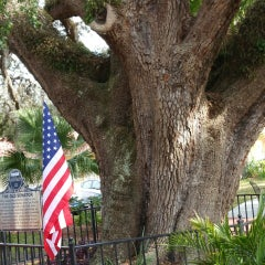 Photo taken at The Old Senator Tree by Andrea K. on 2/22/2015