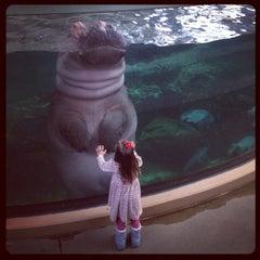 Photo taken at Calgary Zoo by Olga S. on 11/15/2012