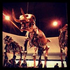 Das Foto wurde bei Page Museum at the La Brea Tar Pits von Angela D. am 2/19/2013 aufgenommen