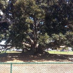 Photo taken at Moreton Bay Fig Tree by Tawmis L. on 3/16/2014