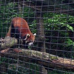 Photo taken at Binghamton Zoo at Ross Park by Caitlin O. on 6/14/2014