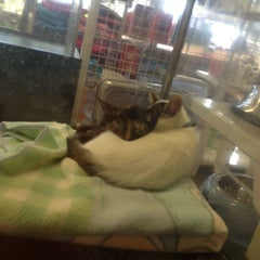 Photo taken at The Pet Corner by Chelseymango on 5/22/2012