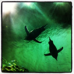 Photo taken at Moody Gardens Aquarium Pyramid by Henry's Hungry Houston on 8/1/2012