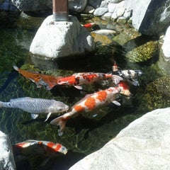 Photo taken at Japanese Friendship Garden by Drew K. on 10/16/2012