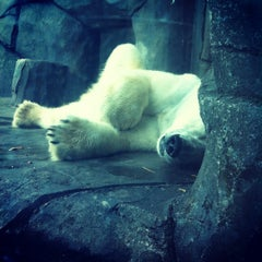 Photo taken at Polar Bear Odyssey At Como Park by Janis B. on 12/19/2012